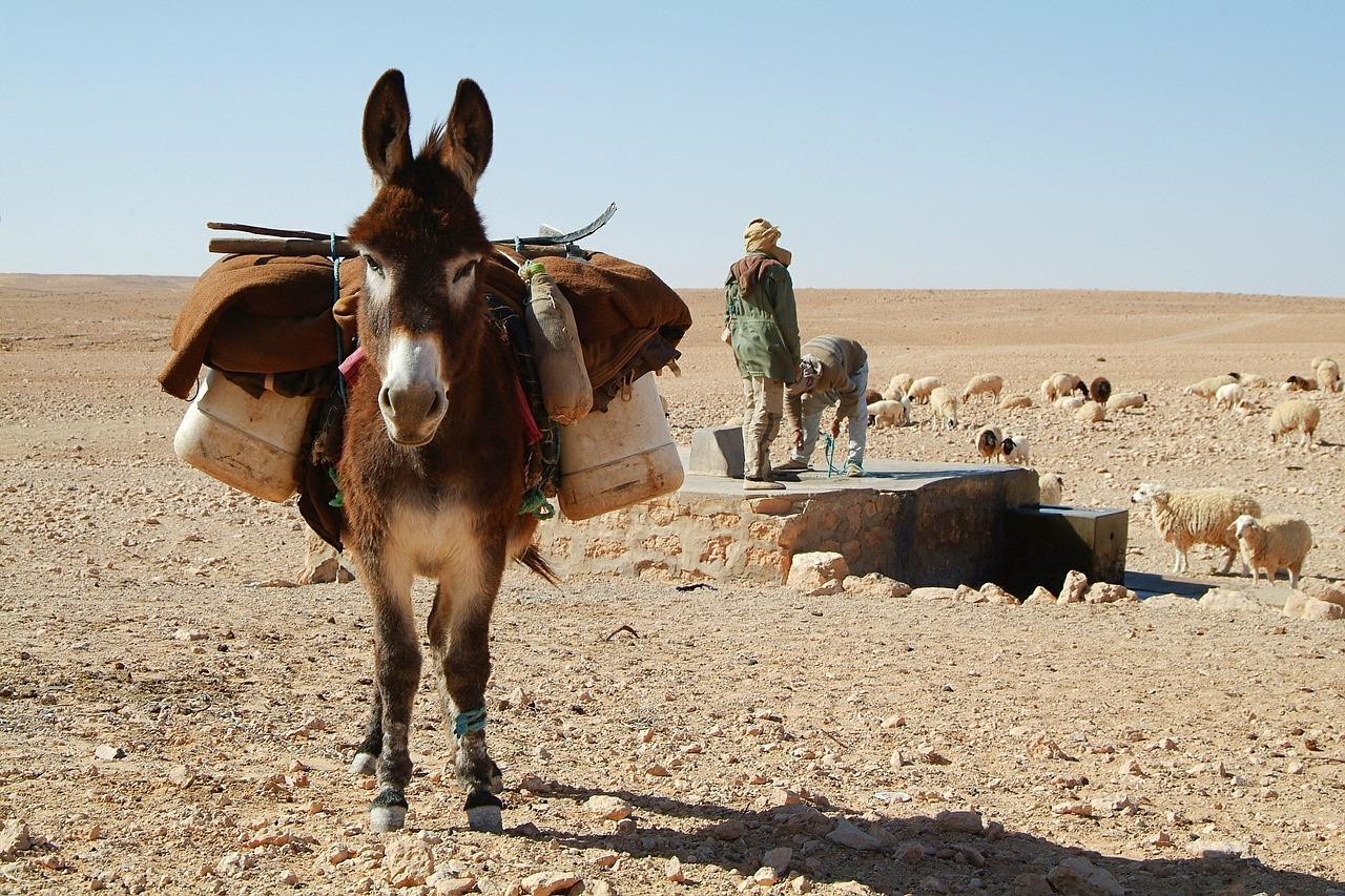 Wybieramy kurort w Tunezji